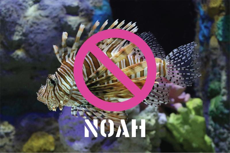 World Ocean Day Focus: Lionfish
